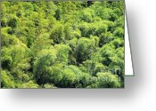 Swaying Greeting Cards - Lush Bamboo Forest Greeting Card by Yali Shi