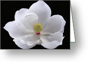 Magnolia Grandiflora Greeting Cards - Magnolia Greeting Card by Floyd Hopper