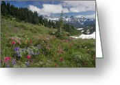 Lupines Greeting Cards - Mountain Meadow Greeting Card by Bob Gibbons