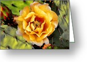 Tucson Arizona Digital Art Greeting Cards - Peach Protect Greeting Card by Lenore Kadish