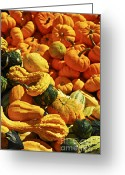 Farming Greeting Cards - Pumpkins and gourds Greeting Card by Elena Elisseeva
