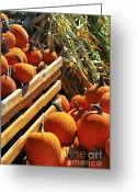 Pumpkin Farm Greeting Cards - Pumpkins Greeting Card by Elena Elisseeva