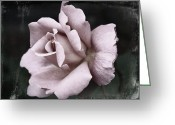 Single Rose Greeting Cards - Purple Rose Greeting Card by Cathie Tyler