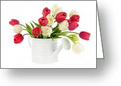 Green Day Greeting Cards - Red and white tulips Greeting Card by Elena Elisseeva