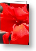 Canna Greeting Cards - Red Canna Greeting Card by M Diane Bonaparte
