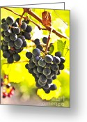 Rural Greeting Cards - Red grapes Greeting Card by Elena Elisseeva