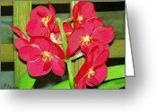Red Orchid Blooms Greeting Cards - Red Orchids Greeting Card by Ellen Henneke