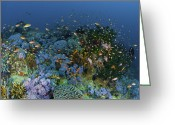 Coral Reef Greeting Cards - Reef Scene With Coral And Fish Greeting Card by Mathieu Meur