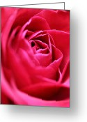 Roses Petals Greeting Cards - Rose Greeting Card by Amanda Barcon