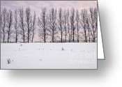 Fence Row Greeting Cards - Rural winter landscape Greeting Card by Elena Elisseeva