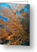 Immobile Greeting Cards - Sea Fan Greeting Card by Matthew Oldfield