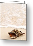 Marine Life Greeting Cards - Seashell and ocean wave Greeting Card by Elena Elisseeva