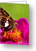 Pollinate Greeting Cards - Silver-spotted Skipper  Greeting Card by Thomas R Fletcher