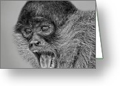 Spider Digital Art Greeting Cards - Spider Monkey 2 Greeting Card by Larry Linton