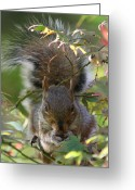Cute Pyrography Greeting Cards - Squirrel Dinner Greeting Card by Valia Bradshaw