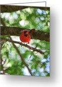 Red Birds Greeting Cards - Stopping By Greeting Card by Adele Moscaritolo
