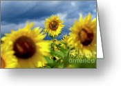 Blurry Greeting Cards - Sunflowers Greeting Card by Bernard Jaubert