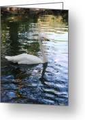 Noth Greeting Cards - Swan Greeting Card by Thea Gilliam