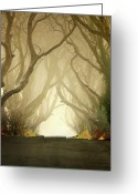 Landscape Framed Prints Greeting Cards - The Dark Hedges Greeting Card by Pawel Klarecki