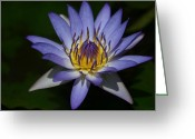 Blue Petals Greeting Cards - The Element of Love Greeting Card by Sharon Mau