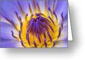 Sensuous Greeting Cards - The Lotus Flower Greeting Card by Sharon Mau