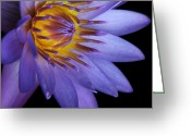 Blue Flowers Digital Art Greeting Cards - The Singular Embrace Greeting Card by Sharon Mau