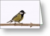 Eat Free Greeting Cards - Tit Greeting Card by Odon Czintos