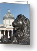 Trafalgar Greeting Cards - Trafalgar Square Lion Greeting Card by Andrew  Michael