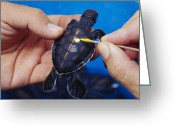 Green Tag Greeting Cards - Turtle Healthcare Greeting Card by Alexis Rosenfeld