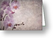 Peeling Paint Greeting Cards - Vintage orchids Greeting Card by Jane Rix
