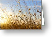 Oats Greeting Cards - Wild Spikes Greeting Card by Carlos Caetano
