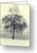 Winter Trees Photo Greeting Cards - Winter Tree Greeting Card by Joana Kruse