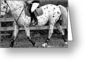 Side Saddle Greeting Cards - 20m Circle at A Greeting Card by East Coast Barrier Islands Betsy A Cutler