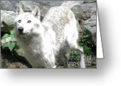 Photograph Of Alpha Wolf Greeting Cards - The Wild Wolve Group A Greeting Card by Debra     Vatalaro