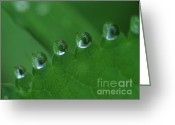 Screen Doors Greeting Cards - Drops Greeting Card by Odon Czintos