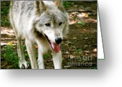 Playful Wolves Greeting Cards - The Wild Wolve Group A Greeting Card by Debra     Vatalaro