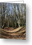 Iceni Greeting Cards - Ambresbury Banks  Greeting Card by David Pyatt