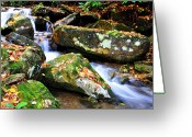 Trout Stream Greeting Cards - Autumn Mountain Stream Greeting Card by Thomas R Fletcher