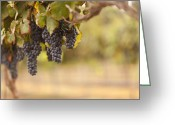 Food Pyrography Greeting Cards - Beautiful Lush Grape Vineyard in The Morning Sun and Mist Greeting Card by Andy Dean