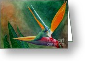 Lanscape Mixed Media Greeting Cards - Birds of Paradise Greeting Card by Darrell Ross