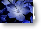 Flowery Greeting Cards - Blue Greeting Card by Al Hurley