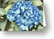 Ken Greeting Cards - Blue Hydrangea Greeting Card by Ken Powers