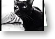 Petstagram Greeting Cards - Booboo Greeting Card by Natasha Marco