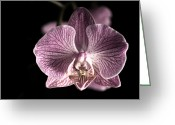 Exotic Flora Greeting Cards - Close up shoot of a beautiful Orchid blossom Greeting Card by Ulrich Schade