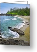 Beach Scenery Greeting Cards - Coast of Pacific ocean in Canada Greeting Card by Elena Elisseeva