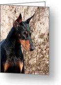 Doberman Greeting Cards - Elegant Greeting Card by Rita Kay Adams