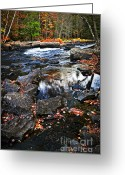 Fall Nature Greeting Cards - Fall forest and river landscape Greeting Card by Elena Elisseeva