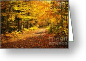 Indian Yellow Greeting Cards - Fall forest Greeting Card by Elena Elisseeva