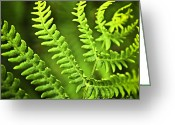 Shadow Greeting Cards - Fern leaf Greeting Card by Elena Elisseeva