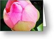 Picoftheday Greeting Cards - Flower Greeting Card by Luisa Azzolini